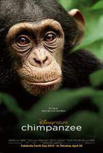 chimpanzee movie cover