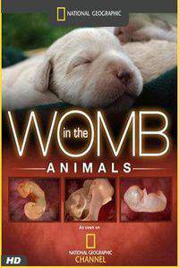 Animals in the Womb main cover