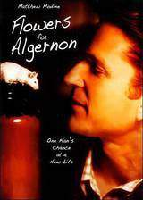 flowers_for_algernon movie cover