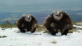 Deadly Descent (Yeti: The Legend of the Abominable Snowman) movie photo
