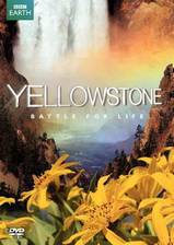 yellowstone movie cover