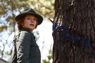 Pete's Dragon movie photo