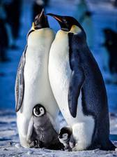 snow_chick_a_penguin_s_tale movie cover