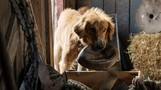 A Dog's Purpose movie photo