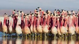 Planet Earth II photos