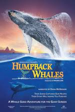 humpback_whales movie cover