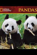 pandas movie cover