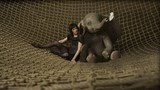 Dumbo movie photo