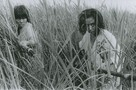 Onibaba (Devil Woman) movie photo