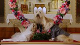 Puppy Star Christmas movie photo