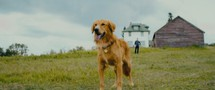 A Dog's Journey movie photo