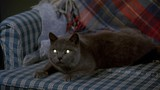 Pet Sematary movie photo