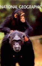 last_of_the_wild_chimps movie cover