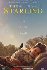 The Starling movie cover