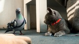 Cats & Dogs: The Revenge of Kitty Galore movie photo