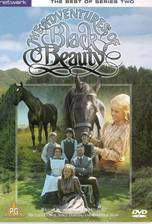 the_adventures_of_black_beauty movie cover