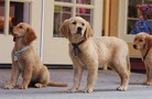 Air Buddies movie photo