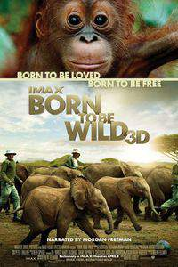 Born to Be Wild main cover