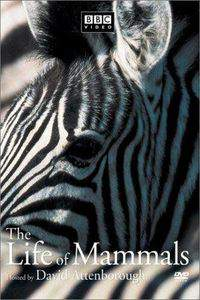 the_life_of_mammals movie cover
