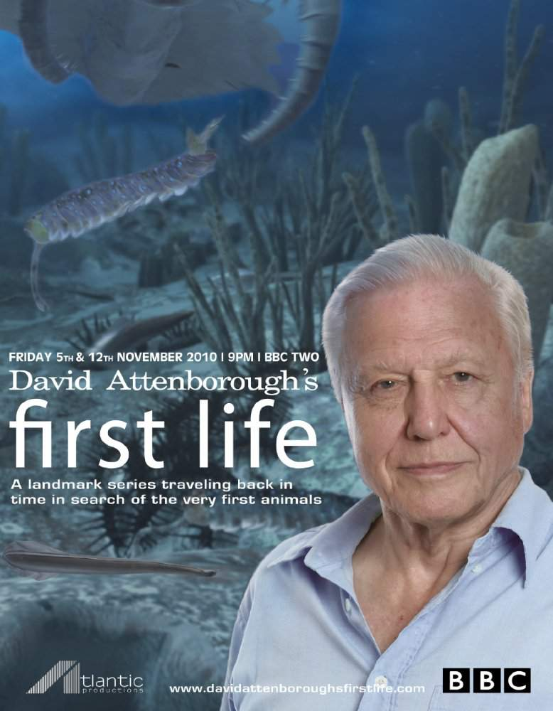 download david attenborough 39 s first life series for ipod iphone ipad in hd divx dvd or watch. Black Bedroom Furniture Sets. Home Design Ideas