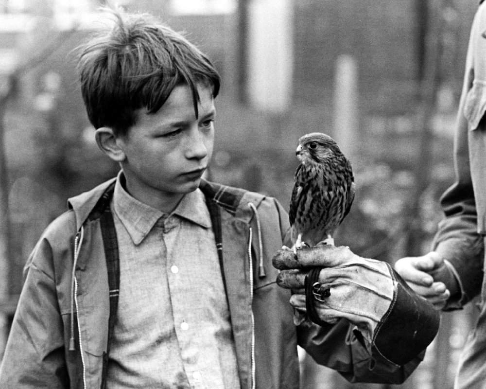 kes the film movie Film education provides free online resources on films for primary and secondary students across the curriculum as well as a library of pdf film notes.