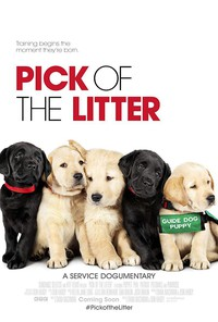 pick_of_the_litter movie cover